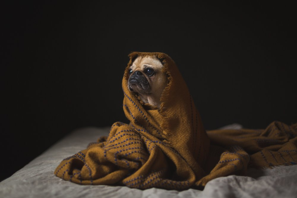 canine-staying-cozy_4460x4460.jpg