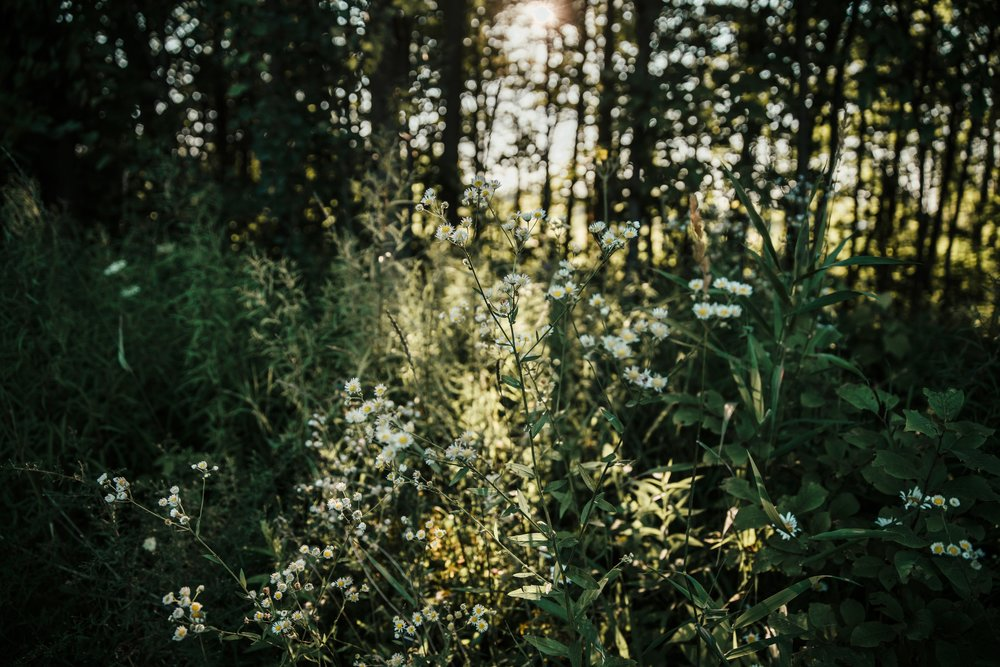 forest-wildflowers_4460x4460.jpg