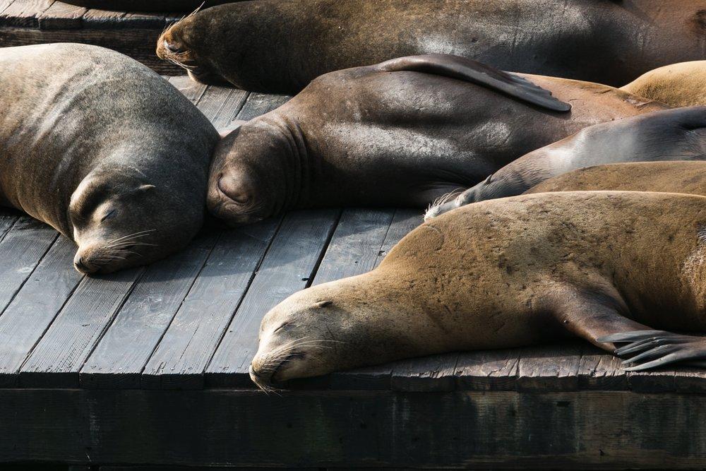 napping-sea-lions_4460x4460.jpg