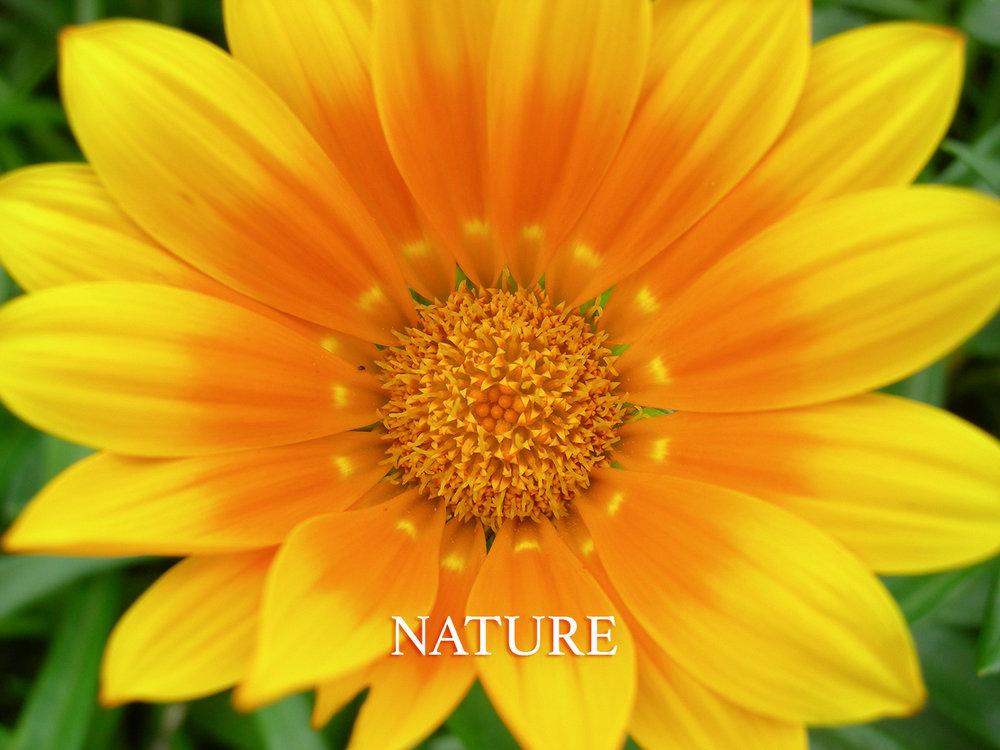 natureicon.jpg
