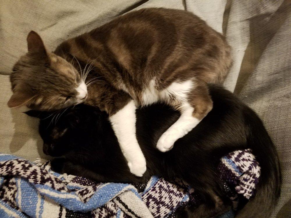 Cats cudking 2.jpg