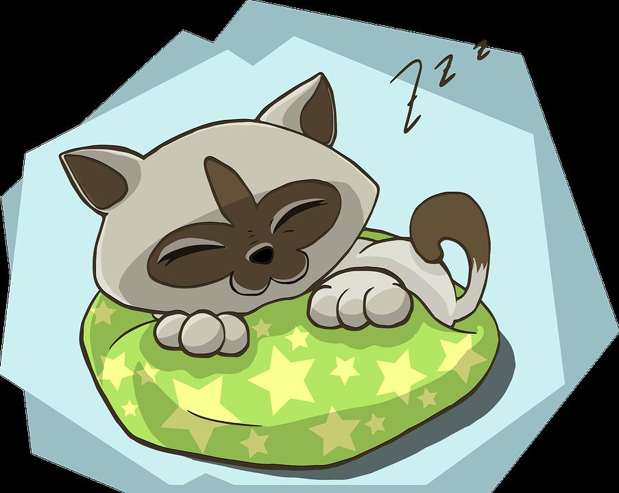 kitten-1456832_960_720.png
