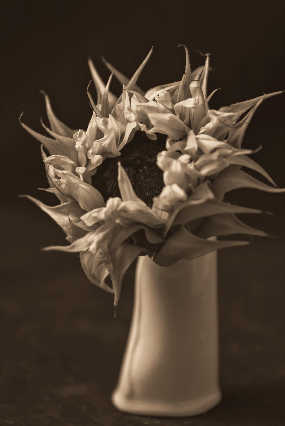 Sunflower in a Vase Photograph