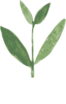 Small Thyme (3).png
