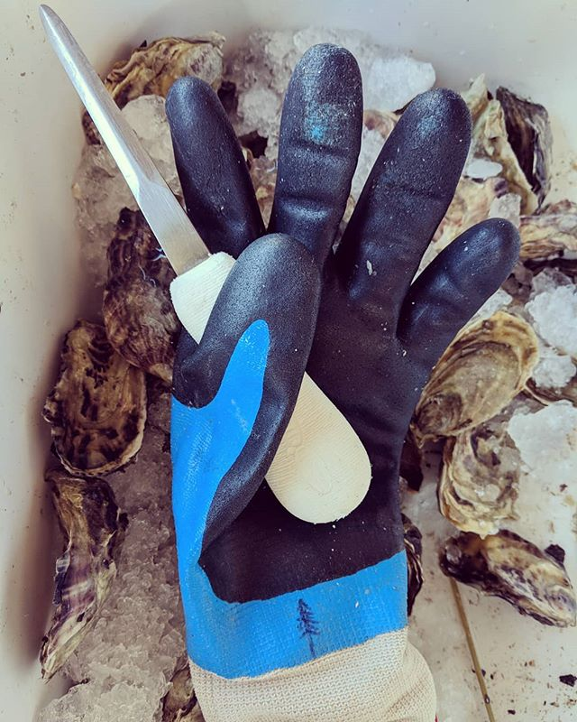 We're all gloved up with nowhere to go, so come on down to @bastion_brewing_company from 5 to 8pm TONIGHT for oyster happy hour!  We'll be shucking the freshest selection of local oysters along with a special release beer pairing! Buy a pint of the Summertime in Bali pale ale or the Roza Kettle Sour and get a free oyster!  What could be better, especially on a Monday?  #mondaymotivation #getshuckedup #popupoysterbar #weencouragegluttony #thecolderthebetter #pnwisbest #pnwoysters #livinginashuckersparadise