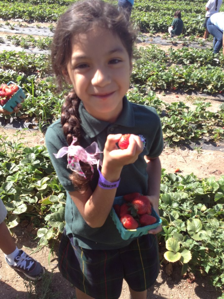 Murray_Family_farms_Strawberry_organic_