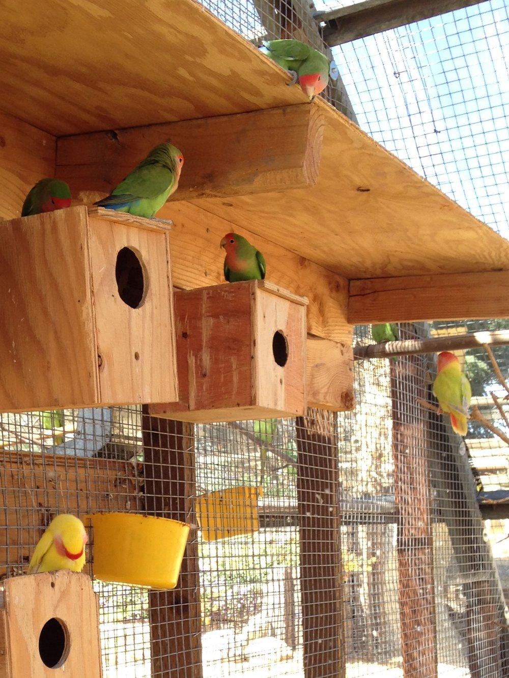 Murray_family_farms_Has_rare_birds_in_their_Family_area.jpg