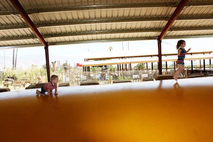 Healthy_Lifestyles_Murray_family_farms.jpg