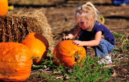 Picking-Pumpkins342342.png