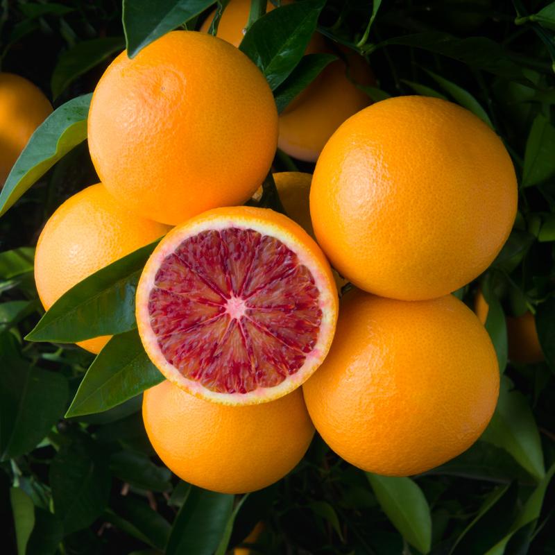 W-78-Torocco-Blood-Oranges.jpg