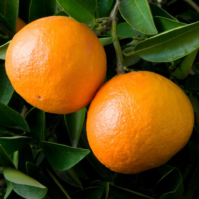W-65-Yosemite-Tangerine.jpg