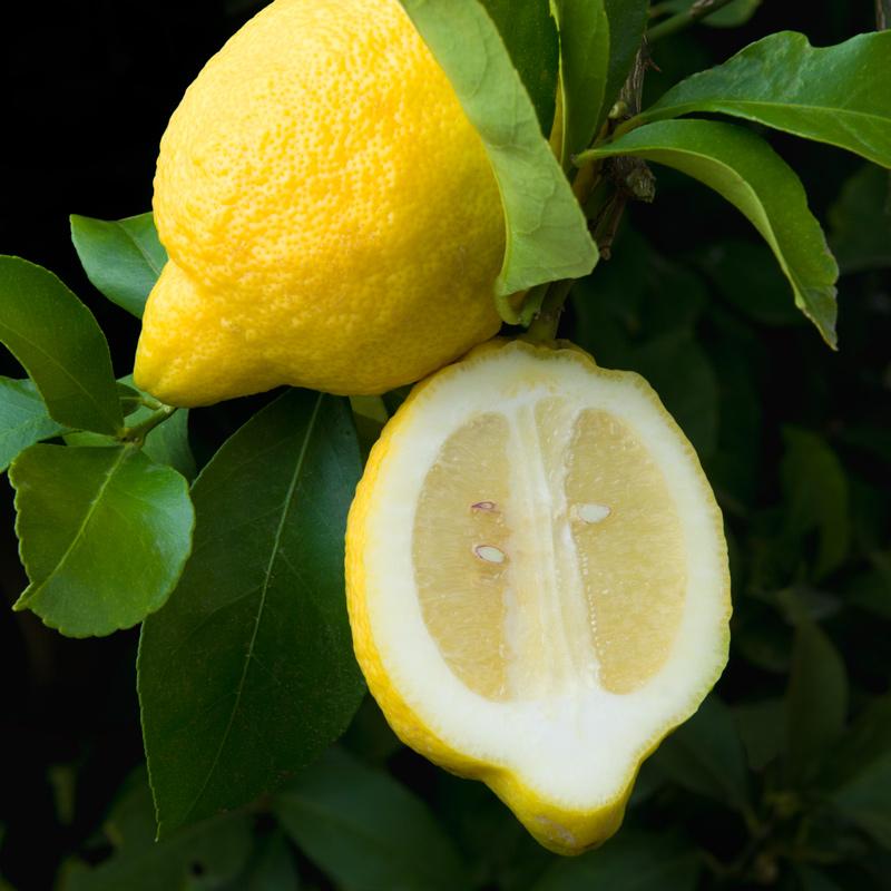 W-58-Santa-Teresa-Lemon.jpg