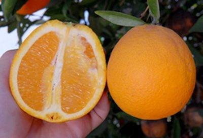 Source: Citrus Pages