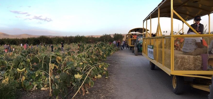 Tractor_rides_in_bakersfield_family_Attractions