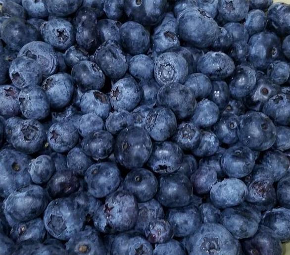 Murray Family Farms Organic Blueberry.jpg