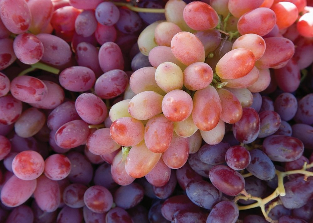 Scarlet Royal grape.jpg