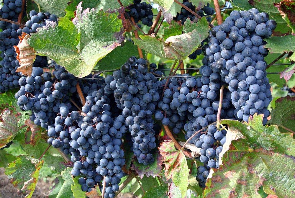 fruit-3219488_1280.jpg