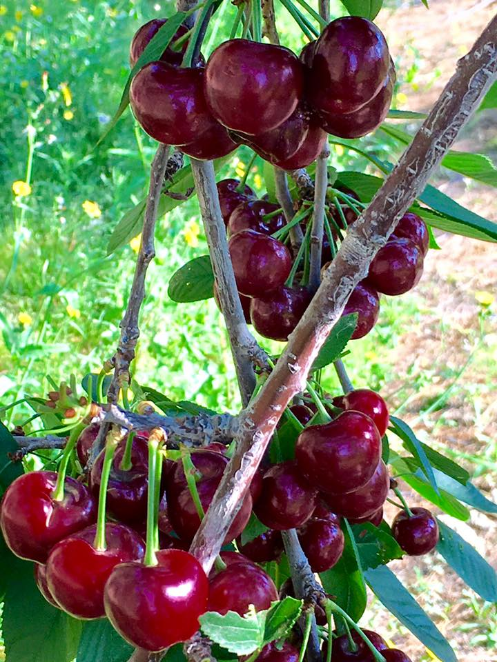 cherry bundle.jpg