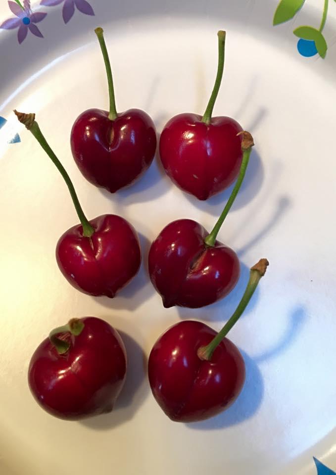 cherry on plate.jpg