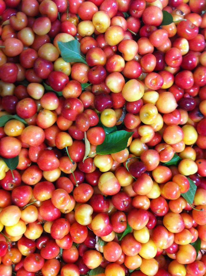 Rainer Cherries.jpg