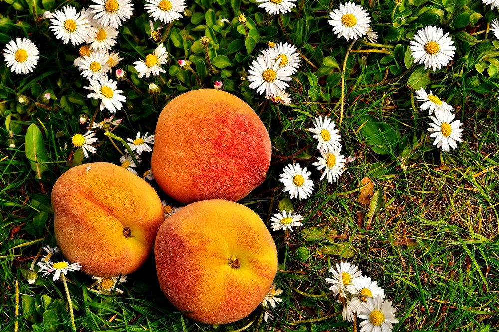 Yellow peach 6.jpg