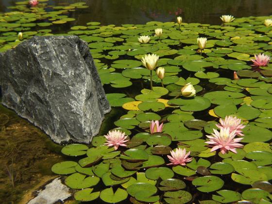 Nature-3[2].jpg