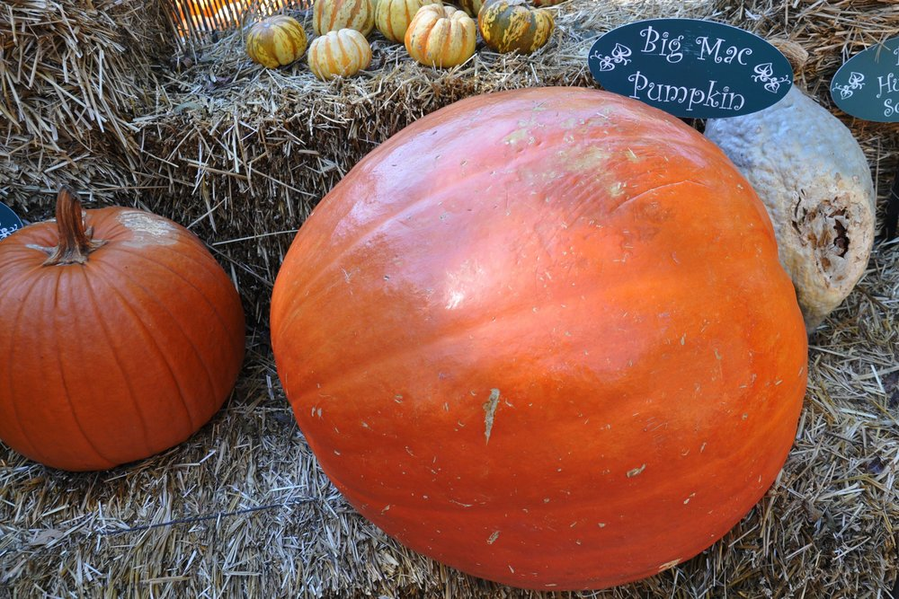 Big-Mac-Pumpkin-56a215a03df78cf77271cf2c.jpg