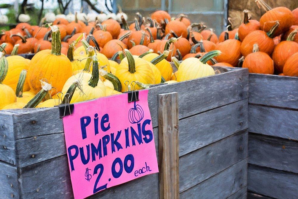 pumpkins-936517_1920.jpg