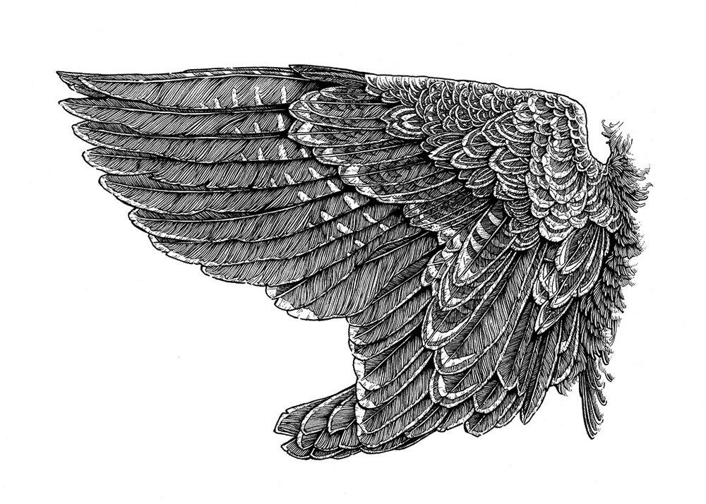 Wing Study I