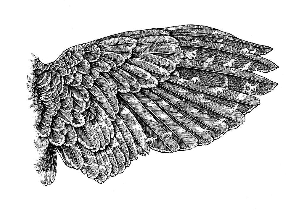 Wing Study II
