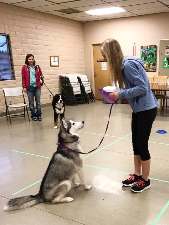 Basic manners and obedience dog training and puppy training group class for sit, stay, down, come in Redding, CA, Anderson, Cottonwood, Red Bluff, Palo Cedro, Bella Vista and Shasta Lake City areas.