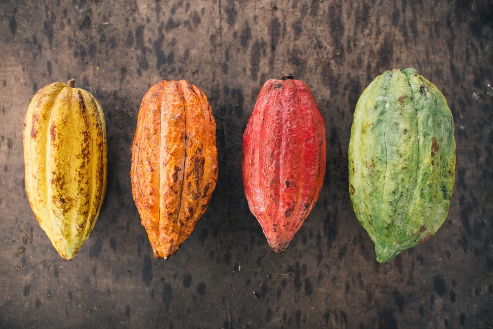 We source our cacao from selected farms and small cooperatives around the Philippines. -