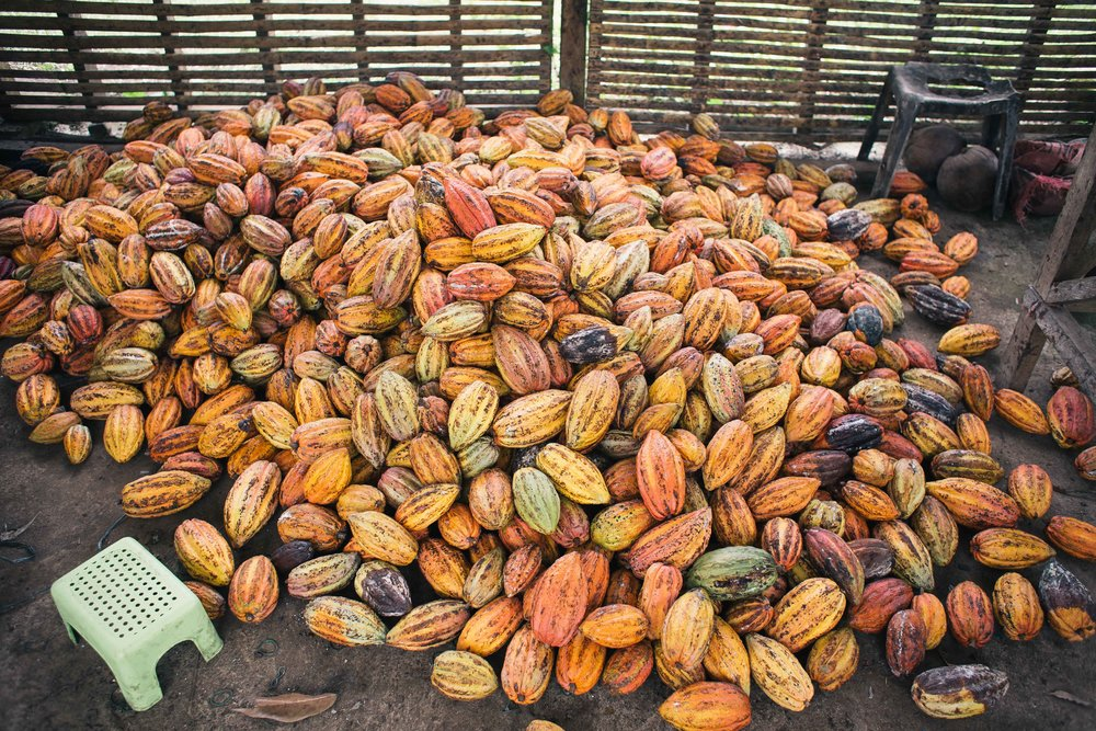 We choose cacao beans that express unique, bold and complex flavors through our chocolate. -