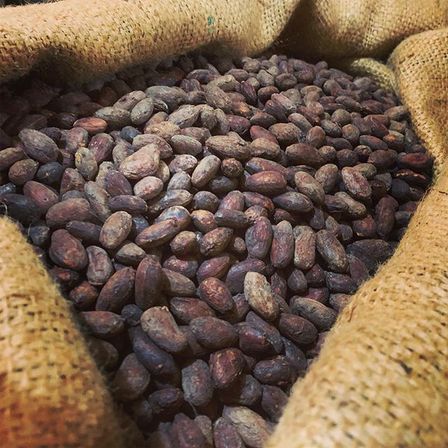 This is your chocolate. Cacao beans are fermented and slowly dried under the sun for days until they reach optimum moisture levels. These beans were selected from location specific areas in Davao Philippines which exhibit unique characteristics #yourchocolate #tigreyolivachocolate #cacaobeans #craftchocolate
