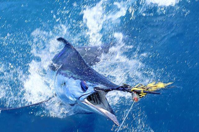 Luxury boats ready for the marlin season in Australia. Get info at info@gofishqld.com.au #luxurytravel #gofishqueensland  #travelgram #instatravel #repeattraveller  #sqcountry #qld #gofish #helicopterpilot #instatraveling #travelgram #traveldeeper #seeaustralia #travel #traveller #fishing #luxury #discoveraustralia #fish #nofilter #mctraveller #nuggetfishing #southaustralia #kinggeorgewhiting #snapper #seesouthaustralia #trout #troutfishing #goldcoast #yachts