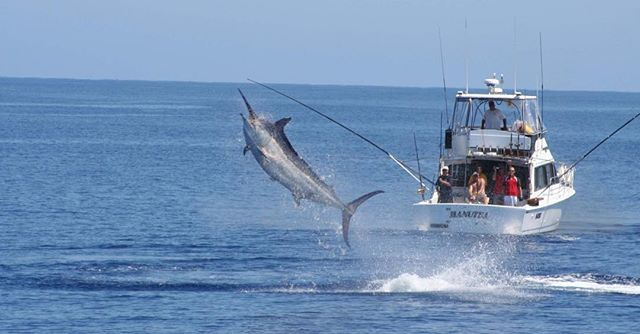Marlin season starts in September in Far North Queensland. Have you booked a boat?  info@gofishqld.com.au #luxurytravel #gofishqueensland  #travelgram #instatravel #repeattraveller  #sqcountry #qld #gofish #helicopterpilot #instatraveling #travelgram #traveldeeper #seeaustralia #travel #traveller #fishing #luxury #discoveraustralia #fish #nofilter #mctraveller #nuggetfishing #southaustralia #kinggeorgewhiting #snapper #seesouthaustralia #trout #troutfishing #goldcoast #yachts