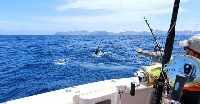 Marlin season is just around the corner. Have you booked your trip? www.gofishqld.com.au #luxurytravel #gofishqueensland @queensland #travelgram #instatravel #repeattraveller #thisisqueensland #qld #gofish #helicopterpilot #instatraveling #travelgram  #seeaustralia #travel #traveller #fishing #traveldeeper #luxury #discoverqueensland  #discoveraustralia #fish #nofilter #mctraveller #exploretnq #destinationgoldcoast #australia #thisisqueensland #seesouthaustralia #visitfrasercoast #fishingaustralia #fishingqueensland