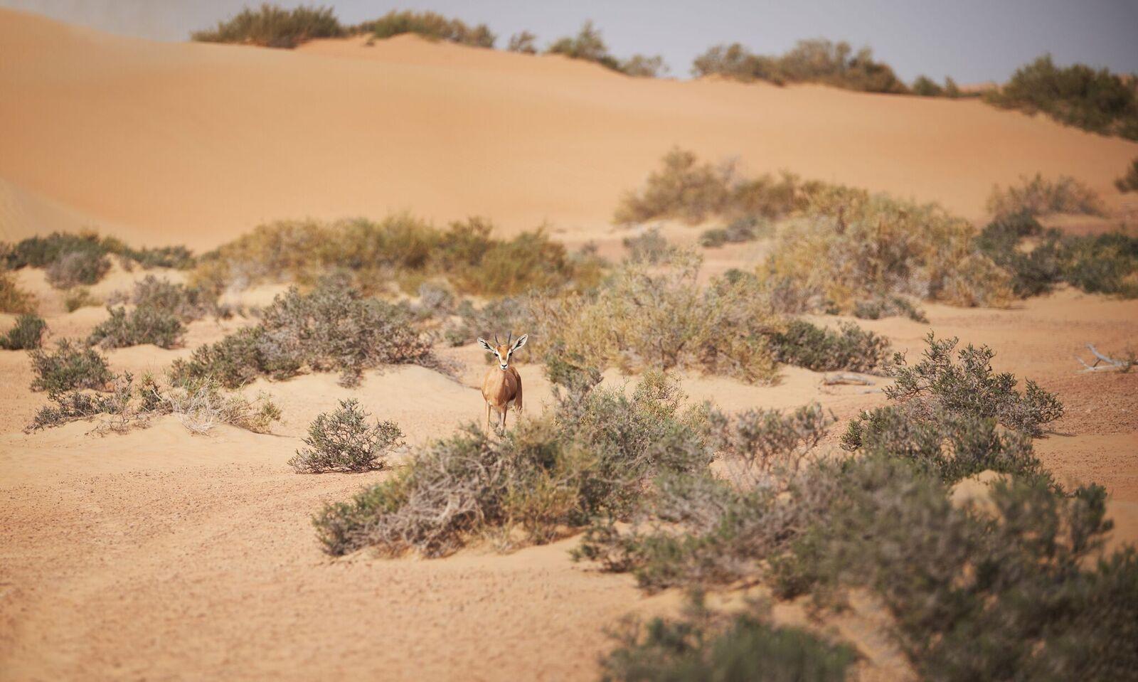 Desert Conservation