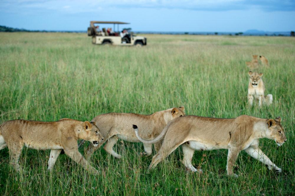 Singita's Serengeti House Game Drive