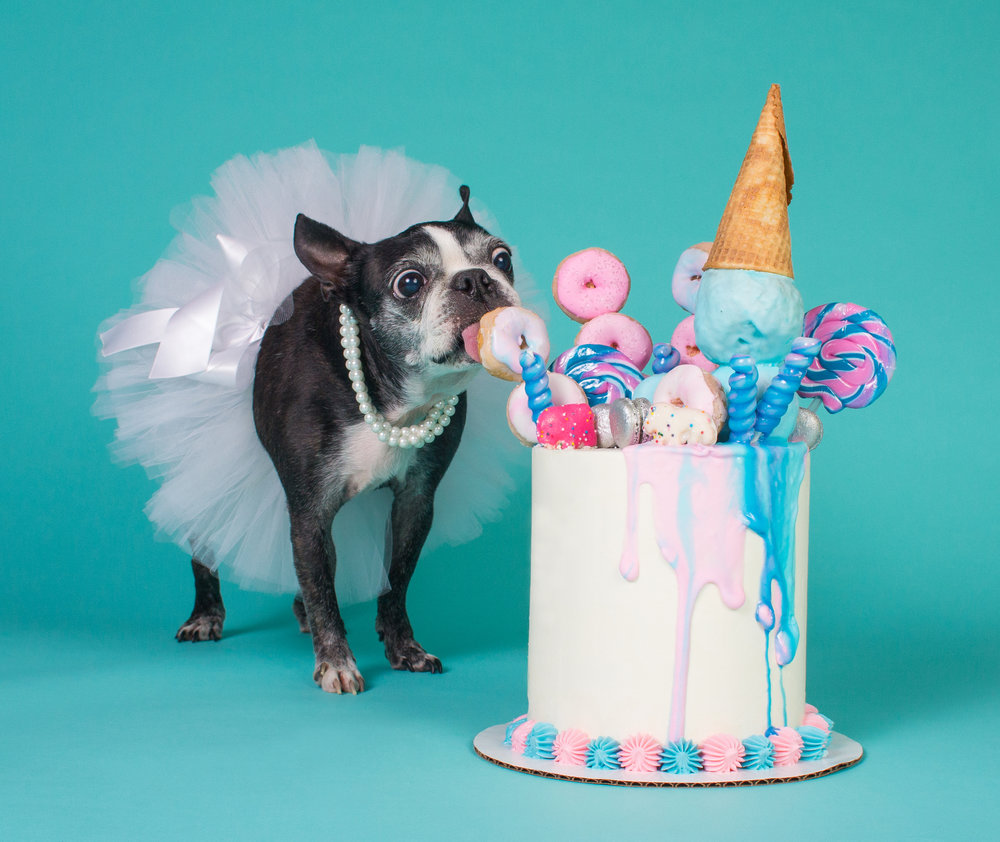 Dog birthday