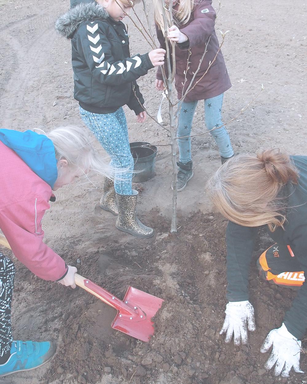 Skolen planter skov i Voel -stor 10 copy.jpg