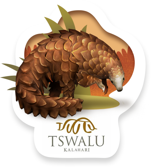 animal pangolin.png
