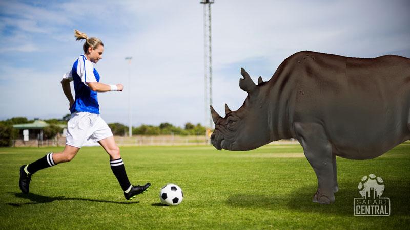 SafariCentral_ar_animalheroes_rhino_S.jpg