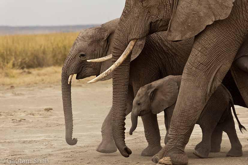 SafariCentral_Elephants.jpg