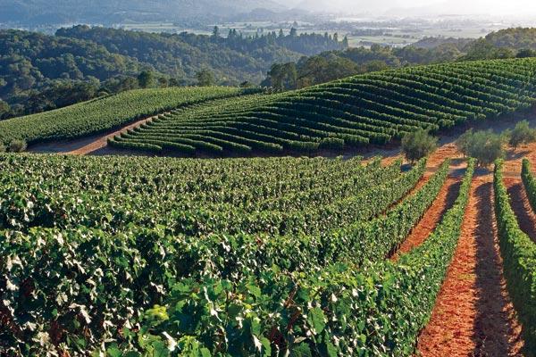 Merryvale-Vineyards.jpg