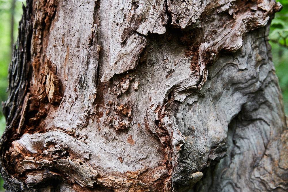 Karma Tree - 081.jpg