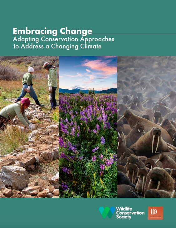 Newly Released Report! - Climate Change may undermine the effectiveness of current efforts to conserve wildlife and ecosystems. In this report we offer examples of how conservationists are strategically altering their approaches to keep pace with climate change. We break down the changes made by 12 featured organizations by WHAT, WHERE, WHEN, and WHY.  Our hope is that this report will help conservationists learn how to move beyond business-as-usual conservation approaches and make their work climate informed. The first step is to consult the latest science on observed and projected climate impacts. Consider how those changes may necessitate shifts in your approaches. For example it may be strategic to preferentially invest in some parts of the landscape over others.You will find that this is not an overwhelming process and is essential to investing limited conservation resources effectively and achieving conservation success in light of climate change.