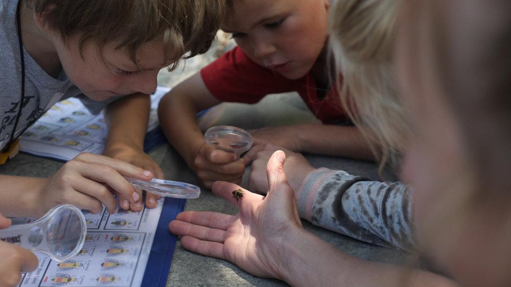 4- Children identifying bees_Scott Rulander.jpg