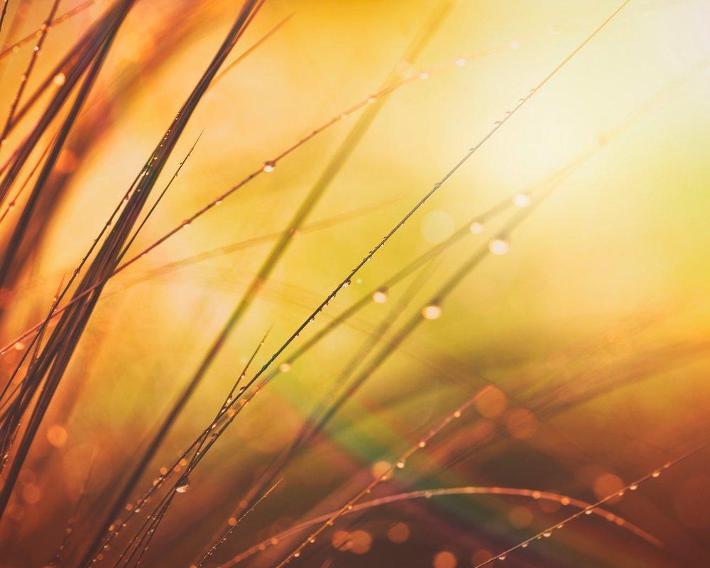 California Invasive Plant Council - California, 2013Strengthening resiliency in Sierra Nevada meadows