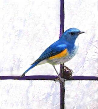 Bluebird Bespoke Made To Measure Custom Curtains Blinds Cushions